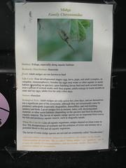 KIF_1597 (HikinHaTTer) Tags: berea kentucky ecomachine ecovillage