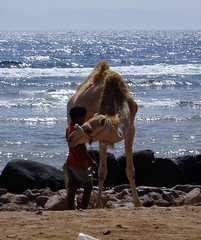 Camel EgyptJun04 (photo_newbie) Tags: boy egypt camel sinai