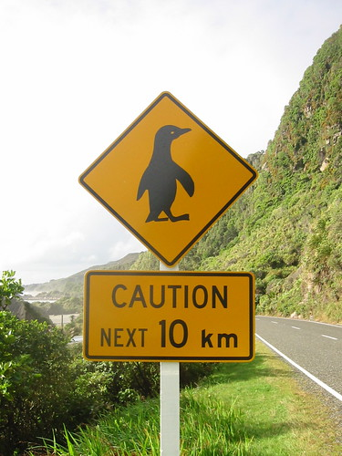 penguins crossing (by Mollivan Jon)