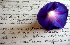 Mots d'Ipome... (Christine Lebrasseur) Tags: blue france flower macro art nature dedication canon words hp poetry quote diary bordeaux greatshot calligraphy morningglory onwhite r707 interestingness15 lioneldeyna allrightsreservedchristinelebrasseur