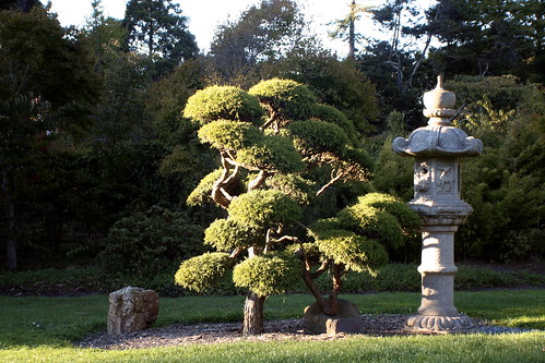 japanese tree art
