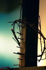 John 19:2 (Wiedmaier) Tags: john cross bibleillustration fauxxpro crownofthorns