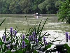 Serene (HowtoLoveYourDog.com) Tags: lake water rowboat lovers centralpark flower flowers manhattan newyork