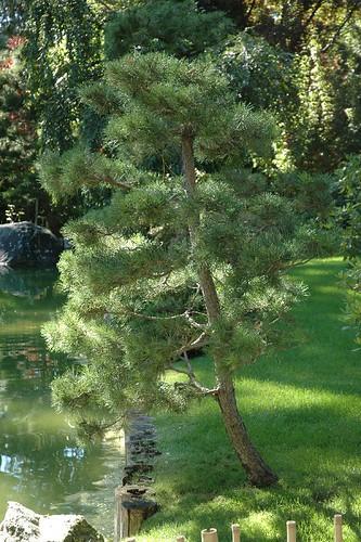 Japanese garden #1