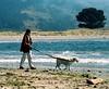 Woman Walking White Dog on Beach (danagraves) Tags: california woman dog tree beach freeassociation grass walking book rocks waves bolinas hills inlet