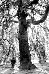 Nirvana Tree (forbes_jeff) Tags: bw tree deleteme4 savedbythedeletemegroup newhampshire surreal nh saveme10 straight nashua greeleypark cotcmostfavorites