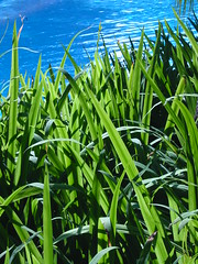sharp (Farl) Tags: morning blue sun green water colors pool grass indonesia hotel java gutentag shangrila shrub jawa surabaya eastjava jawatimur surabayashangrila
