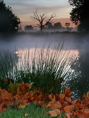 Autumn leaves (Kevin Day) Tags: uk autumn england lake tree leaves reeds deadtree slough berkshire kevday langleypark