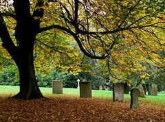 A Blanket For The Departed (Lazy B) Tags: autumn tree cemetery graveyard leaves tag3 taggedout 510fav ilovenature topv333 tag2 tag1 seasons lovely1 tranquility 100v10f fv5 photowalk fz5 gravestones pick10 chesnut 20topfaves2005