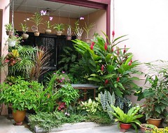 Our frontyard garden in September 2004 - enjoy!