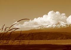 Mt Adams tries to hide (carolyn_in_oregon) Tags: mountain sepia washington saveme saveme2 deleteme10 mtadams troutlake ilikegrass