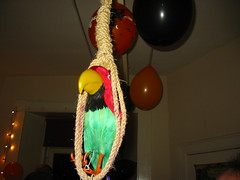 Summary Execution (mrry) Tags: halloween 2005 edinburgh party october parrot noose hanging
