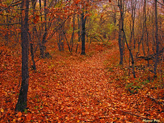 Wood (marcopriz) Tags: wood forest colours colour colors color red orange autumn trees tree nikon path leave leaves trunk nice italy mountains mountain appennines bright glitter pic season seasons wonder topv111 deleteme deleteme2 saveme1 deleteme3 deleteme4 saveme saveme2 5 deleteme5 deleteme6 deleteme7 deleteme8 saveme3 deleteme9 deleteme10