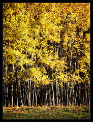 Autumnal Wood - by Iguana Jo