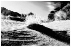 Weed (Jeff T. Alu) Tags: desert digital black white california surreal moody lonely dark outdoors bleak blackandwhite deserted illusion zen medetation medetate power impact graphic doom bright earthy dirt gritty intense visionary heat passion 4x4 remote desolate dreamy nightmare euphoric