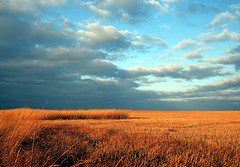 ...Prairie Landscape... (Random Images from The Heartland) Tags: autumn sunset sky field southdakota midwest afternoon straw prairie plains dakotas bail56 randomimagesfromtheheartland