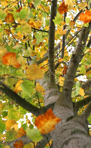 Leaves Turn