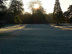 Frosty bute (recurrence) Tags: frost winter cardiff arboretum
