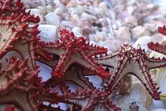 Starfish (CharlesFred) Tags: life africa travel sea shells fish port tanzania seaside fishing market starfish african daressalaam indianocean charles east explore favourites favourite fishmarket myfavourites darwinism 100000 eastafrica tanzanian fishingport twohundred roffey charlesfred 200906 121000 twohundredfavourites
