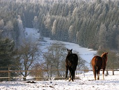 """Be sure, we wont find any grass overthere!"" (Linda6769) Tags: schnee winter two horse brown snow animal forest fence germany woods frost village hoarfrost january thuringia explore woodenfence zaun pferd baum raureif conifer nadelbaum hildburghausen twoanimals konifere explored brden holzzaun zweitiere koniferenimwinter coniferinsnow"