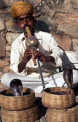 Snake Charmer (JordanH) Tags: photoblog india rajasthan jaipur amberfort snake cobra snakecharmer