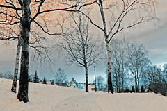 Pallour (Wen Nag (aliasgrace)) Tags: park trees winter oslo norway 1025fav top20winter pale explore paleness torshovparken torshov