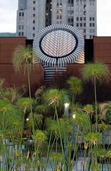 Papyrus 3 (optically active) Tags: sanfrancisco plant garden papyrus canonrebelxt