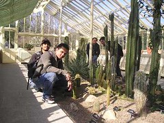 Kaktus2 kat National Botanic Garden