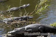 Everglades 02©