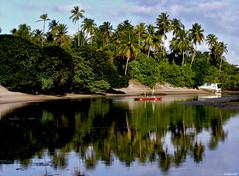 Restinga (ValerioFigueiredo) Tags: brazil praia beach water brasil natureza pernambuco paisagens portodegalinhas restinga dscp93a cmeradeourobrasil emptyplanet riomaracape