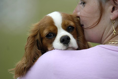 Young brown Cavalier King Charles Spaniel kissed by a Woman (20070528-122926-061) (ri.co) Tags: dog cavalierkingcharlesspaniel puppy hund hndchen brown white woman kissing braunweis brownwhite kuss kiss cute niedlich kschen budapest kincsempark hundeschau cavalier kingcharles spaniel welpe kutya kiskutya 1000views 2000views 3000views 4000views 5000views 6000views 7000views 8000views 9000views 10000views