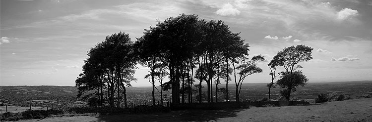 Cleeve Hill Tree View 3