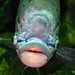 Fish image, photo or clip art