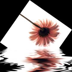petal fondue (DocTony Photography) Tags: flower nature bravo flood blossom philippines gerbera manila daisy bloom naturesfinest interestingness5 interestingness6 explorefrontpage nikond80 artlibre doctony superhearts explore6april2007