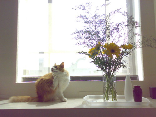 Cat And Bouquet
