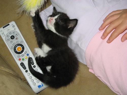 kitten3 010