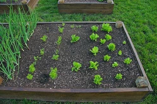 Onions, carrots, lettuce