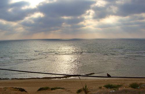 Jaffa-070513-17