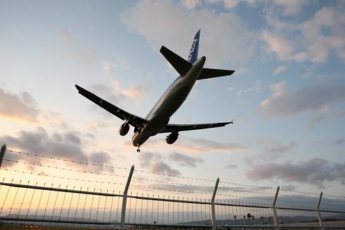 ANA's A320 (JA8393) landing to RJOO in dusk