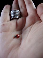 ladybug (lady bug) Tags: nós