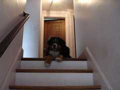Molly at the top of the stairs
