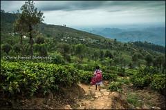 Schoolgirl.   Haputale (Claire Pismont) Tags: asie asia srilanka haputale tea teaplantation school schoolgirl travel travelphotography documentory viajar voyage pismont clairepismont cloud run running
