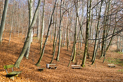 Do you still remember (OR_U) Tags: 2016 oru austria salzburg forest nature benches five 5 trees winter sunshine jethrotull birthday hike