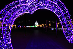 Ulsan Grand Park Light Show (JTeale) Tags: flowersplants december ulsangrandpark landscape winter ulsan korea