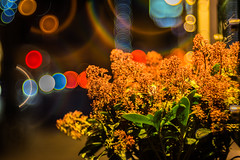 Flowers in the Dark - Photo # 15 of a Christmas Series (*Capture the Moment*) Tags: 2016 advent altglas bloom blüten bokeh fotowalk mog meyergörlitztrioplan10028 meyeroptikgörlitztrioplan10028 nightshot pflanzen plants sonya7m2 sonya7mii sonya7mark2 sonyilce7m2 trioplan28100neo bokehlicious