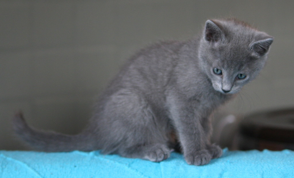 Kittens of Pegusha - Page 2 3264277964_e712c21a4b_b