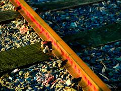 Blood on the tracks (Raoul Pop) Tags: wood winter metal rust iron flickr seasons unitedstates time saturday maryland potomac sabbath smugmug olympuse500 googlephotos pubrp