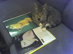 "Furio reading ""Cat Fancy"" (1 of 3)"
