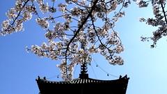 Brief Lives () Tags: japan temple pagoda poem inari  sakura  39 wakayama  tanabe nothingbutflowers  kozanji    39steps 2landings