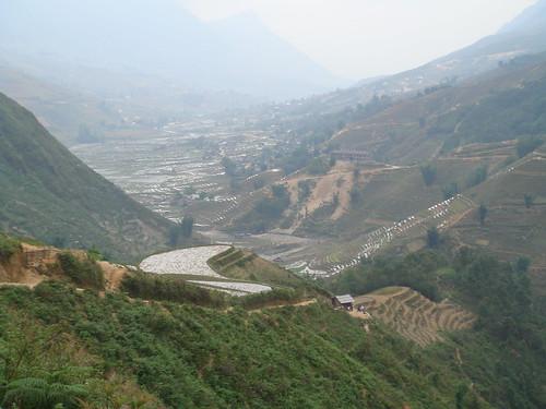 Campos de arroz en el valle